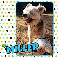 Adopt A Pet :: Miller - Scottsdale, AZ