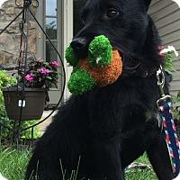 Adopt A Pet :: Duffy - New Oxford, PA