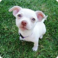 Adopt A Pet :: Paco - Tucson, AZ