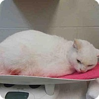 Adopt A Pet :: *FROSTY - Upper Marlboro, MD