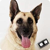 Adopt A Pet :: Gretchen - Prescott, AZ