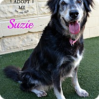 Adopt A Pet :: Suzie - Youngwood, PA