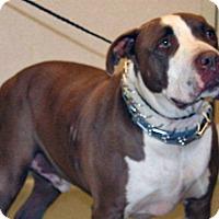 Adopt A Pet :: Chubbz - Wildomar, CA