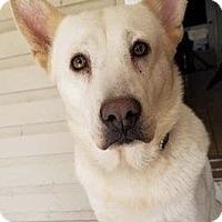 Adopt A Pet :: ohana - Hanover, PA