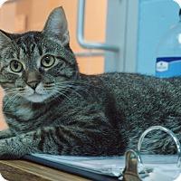 Adopt A Pet :: Fiona - Evansville, IN
