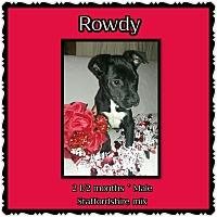 Adopt A Pet :: Rowdy - Richmond, CA