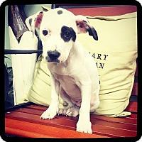 Adopt A Pet :: Sasha - Grand Bay, AL