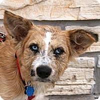 Adopt A Pet :: Lady Lisa - Newcastle, OK