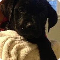 Adopt A Pet :: Felicity - Marlton, NJ