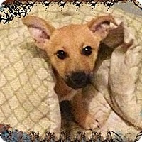 Adopt A Pet :: 'BASIL' - Brooksville, FL