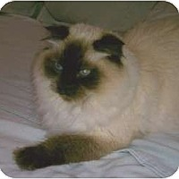 Adopt A Pet :: Eloise - Beverly Hills, CA
