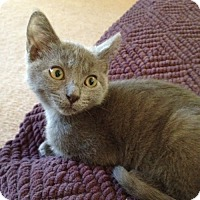 Adopt A Pet :: Eve - Monroe, GA