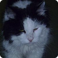 Adopt A Pet :: Roycroft - Hamburg, NY