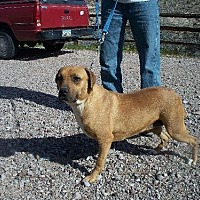 Adopt A Pet :: Janta - Golden Valley, AZ