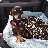 Adopt A Pet :: Mocha - Vacaville, CA