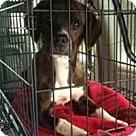 Adopt A Pet :: Samuel