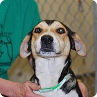 Adopt A Pet :: Chacha - Buffalo, WY