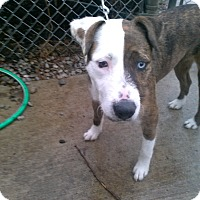 Adopt A Pet :: Diamond - Oberlin, OH