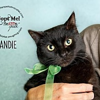 Adopt A Pet :: Candie - Pearland, TX