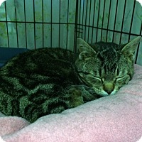 Adopt A Pet :: Kiwi - Byron Center, MI