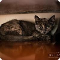 Adopt A Pet :: Snickers - Fredericksburg, VA