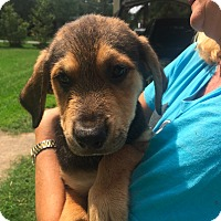 Adopt A Pet :: Whitley meet me 10/23 - Manchester, CT