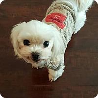 Adopt A Pet :: Sha Sha - Buena Park, CA