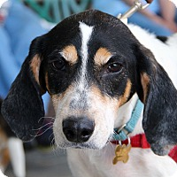 Hound (Unknown Type) Mix Dog for adoption in Richmond, Virginia - AJ *Foster Me