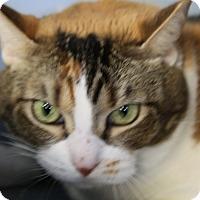Adopt A Pet :: Callie - Sarasota, FL