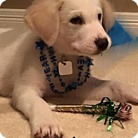 Adopt A Pet :: August - Garland, TX