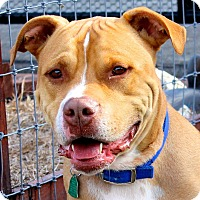 Adopt A Pet :: Bruno - West Grove, PA