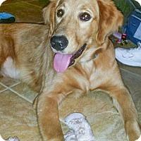 Adopt A Pet :: Piper 670 - Naples, FL