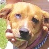 Adopt A Pet :: Katie - St Petersburg, FL