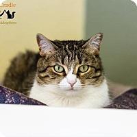 Adopt A Pet :: Melissa - Fargo, ND