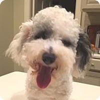 Adopt A Pet :: Pierre - Atlanta, GA