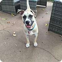 Adopt A Pet :: Gabe - oklahoma city, OK