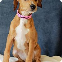 Adopt A Pet :: Wanda - Waldorf, MD
