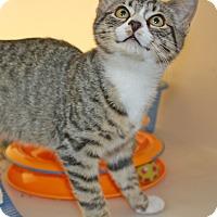 Adopt A Pet :: Deeks - Harrisonburg, VA