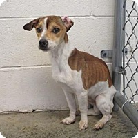 Adopt A Pet :: Enzo - Chester, IL