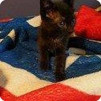 Adopt A Pet :: DAKOTA - Hampton, VA