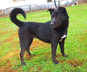 Border Collie Mix Dog for adoption in Washburn, Missouri - Little Debbie