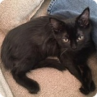 Adopt A Pet :: Dos - McHenry, IL
