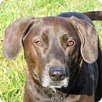 Adopt A Pet :: Mack - Nashville, IN