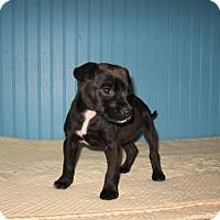 Adopt A Pet :: Paisley - KANNAPOLIS, NC