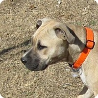 Adopt A Pet :: Myla - Copperas Cove, TX