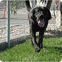 Adopt A Pet :: Jackson - Meridian, ID