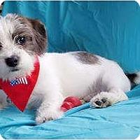 Adopt A Pet :: Sam - Mooy, AL
