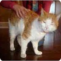 Adopt A Pet :: Oliver - Strathmore, AB