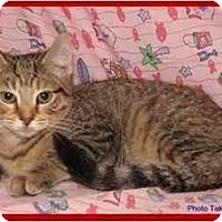Adopt A Pet :: Tessa - Orlando, FL