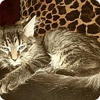 Adopt A Pet :: Bud - Sterling Hgts, MI